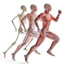 Faszien- und Muskeln in Bewegung